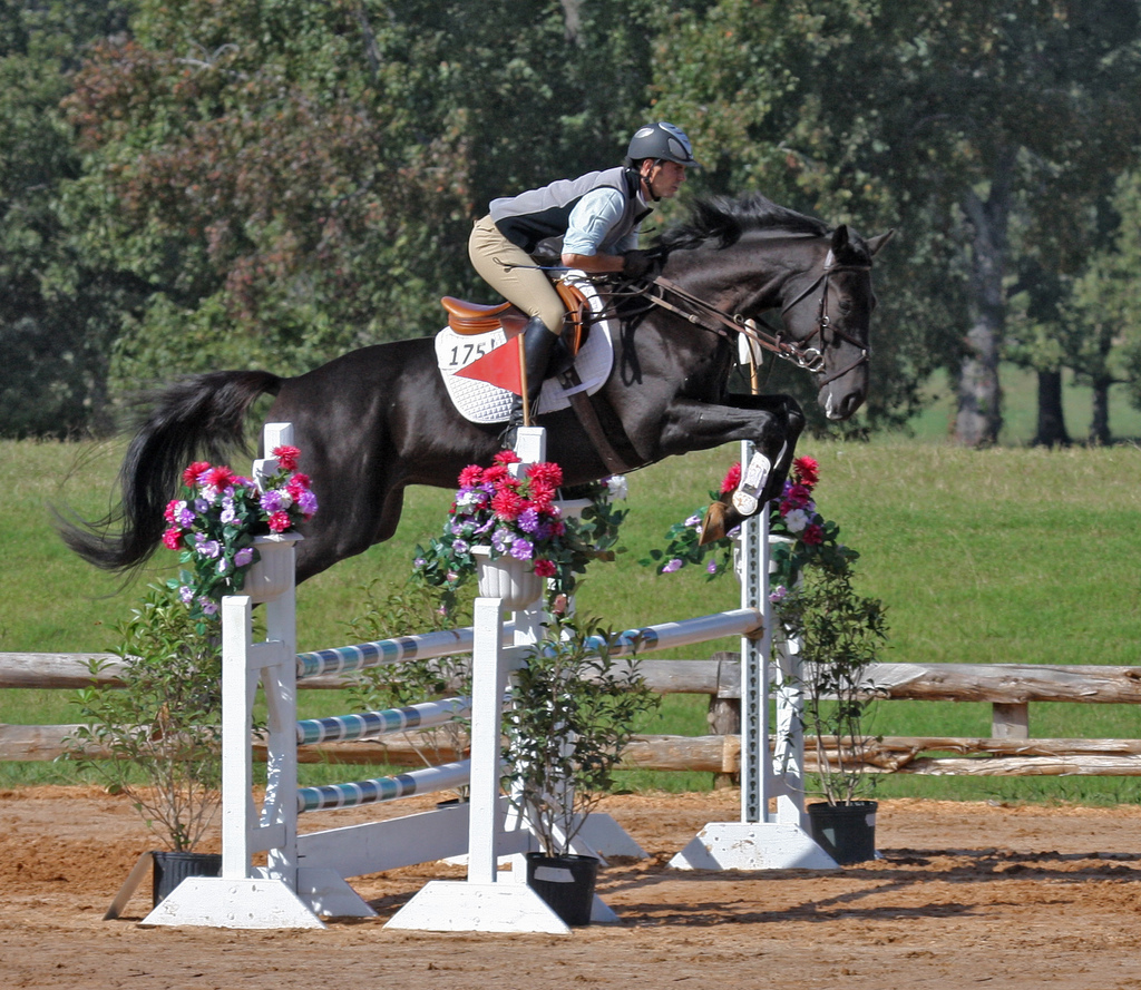 horse competition, horse jumping