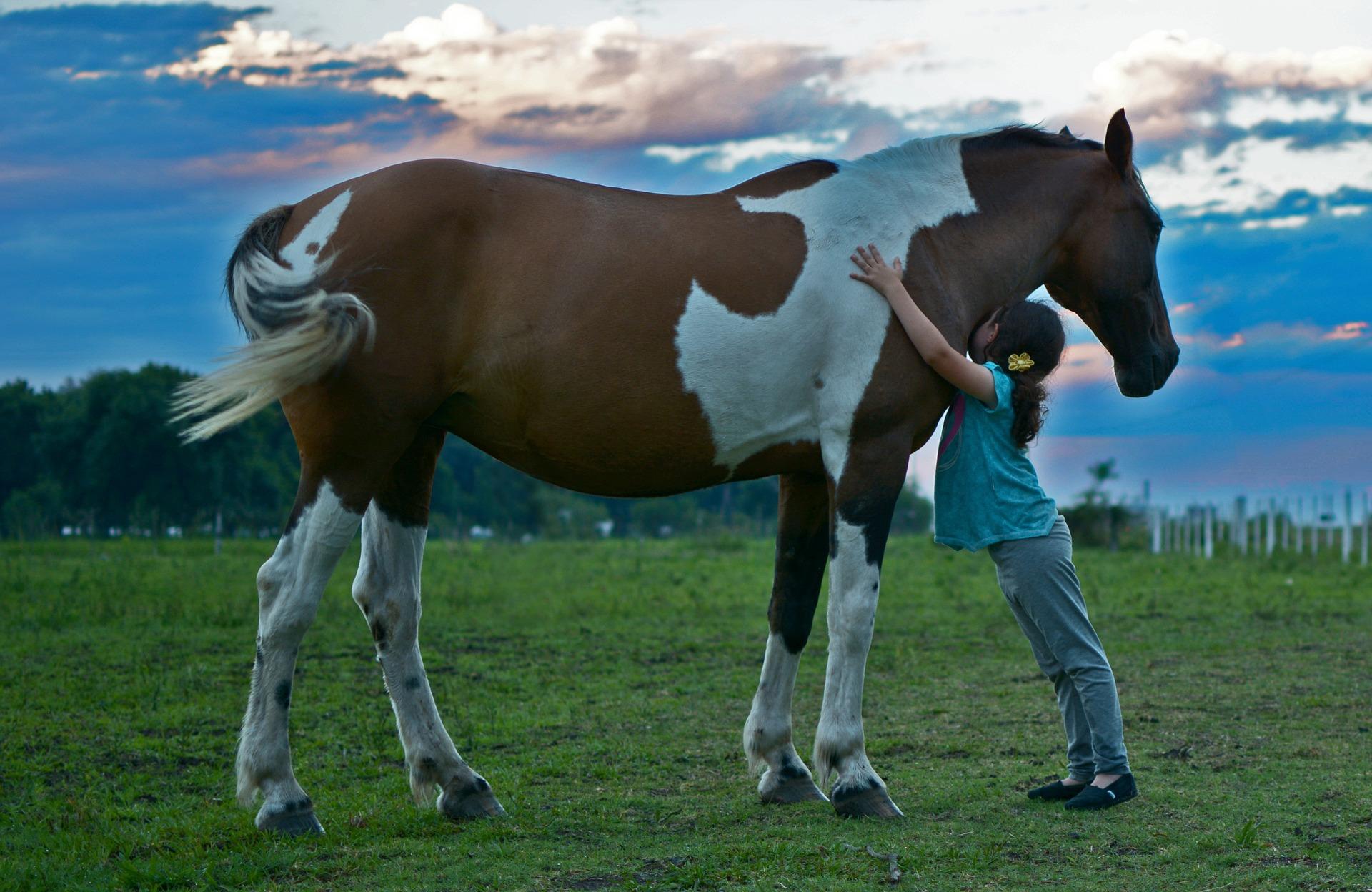 girl, horse